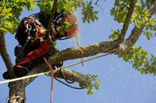 Taille et élagage, l'art d'entretenir ses arbres et arbustes