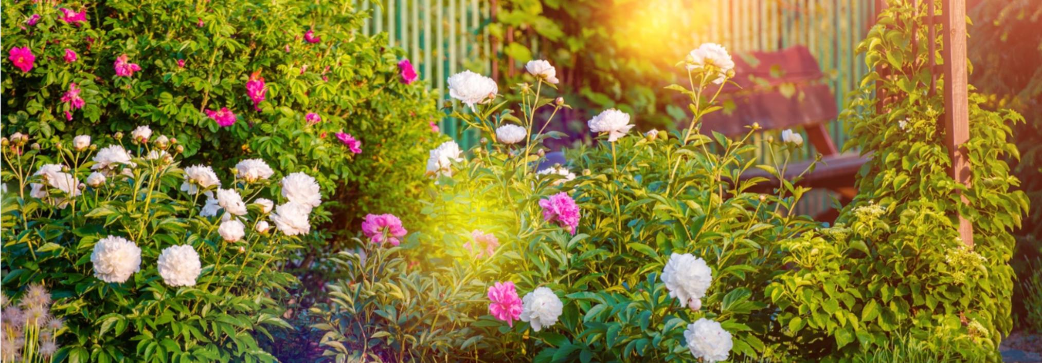 Avoir un beau jardin, ça s'entretient.