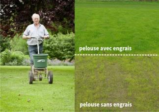 Pour une pelouse verte, pensez à la fertilisation !