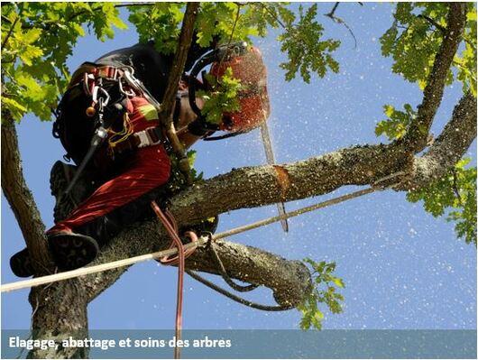 elagage_soin_arbres_paysagiste_67