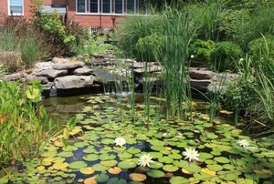 Un bassin plein de vie dans son jardin