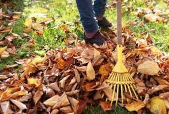 Utiliser les feuilles mortes au jardin